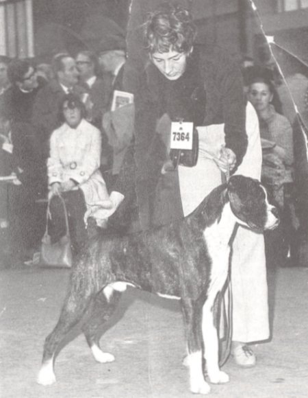BOB Crufts 1971 - Marbelton Desperate Dan