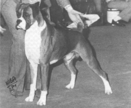 Crufts 1974 BOB - Tremendous of Trywell