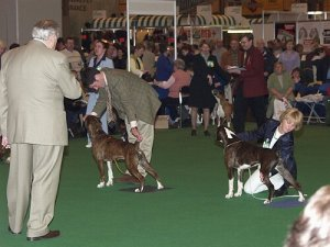 Scene from Crufts 2002