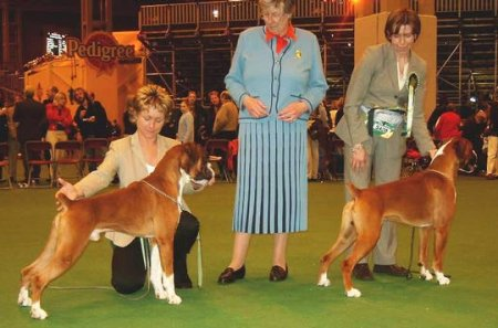 Crufts 2003 - Hilthorn Gold Blend (BOB) and Marbelton Fair To Middlin (Dog RCC)
