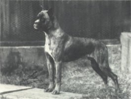 Flori von Dom - Taken from Supplement to OUR DOGS 16 Dec 1938, Page 74
