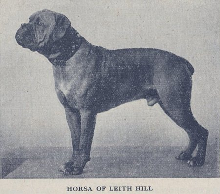 Horsa of Leith Hill - Picture from Crufts Catalogue 1938 page 498