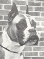 Rainey-Lane Sirocco aged 7 years old - Head Shot - Photo from Dog World Annual 1964, Page 8