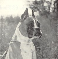 Rainey-Lane Sirrocco aged 8 years old - Head Shot - Photo from Dog World Annual 1965, Page 29