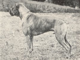 Stainburndorf Zulu - Left Side - Photo from Our Dogs, 18 Dec 1942, Pg 39