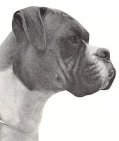 CH Starmark Mike - Head Shot - Photo from Dog World Annual 1969, Page 85