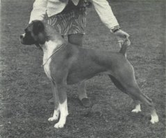 CH Swanfield Southern Sweetie - Left Side