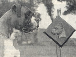 CH Winkinglight Viking with the American Boxer Club Trophy for best dog at B.B.C Show - Taken from 1953 Dog press Clippings